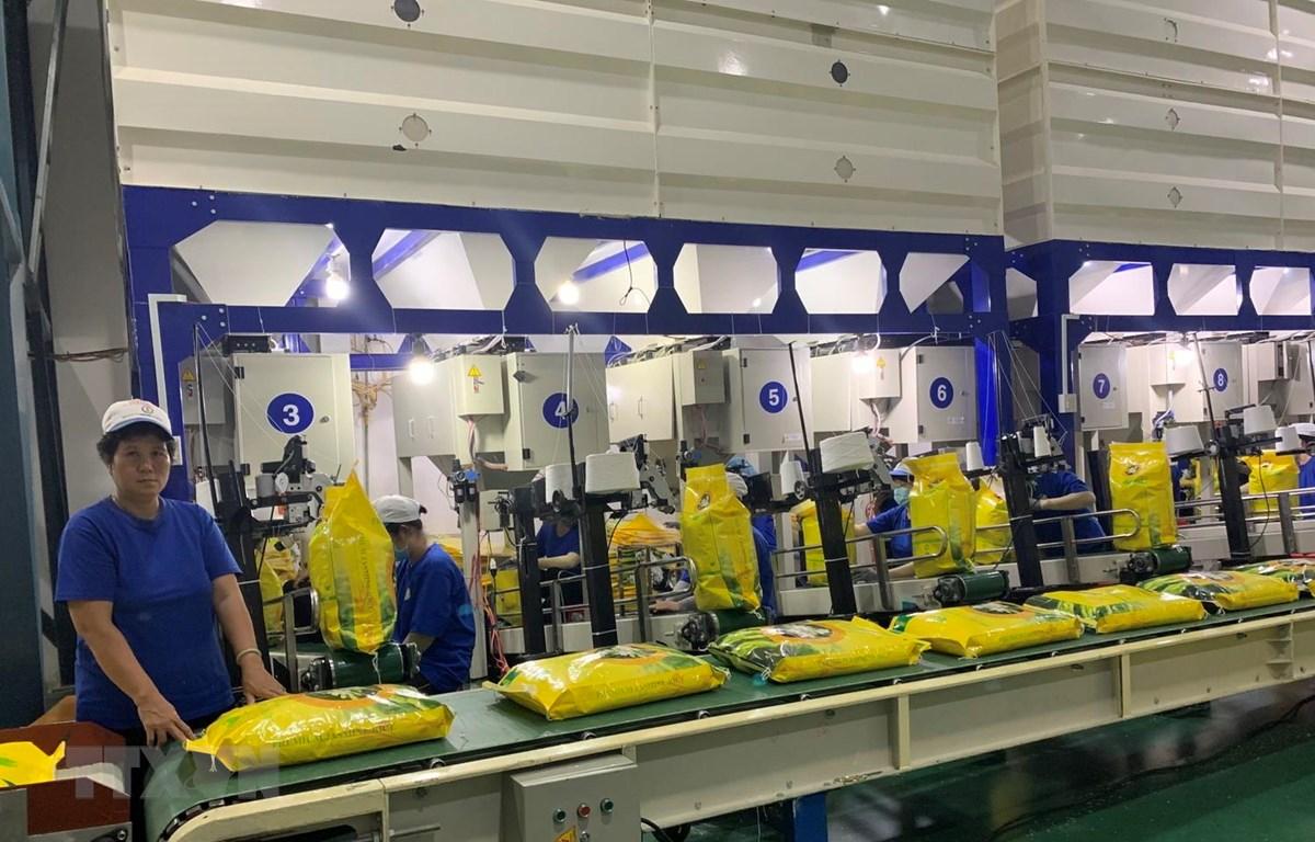Chuyển gạo vào container tại Công ty cổ phần Nông nghiệp Công nghệ cao Trung An. (Ảnh: TTXVN phát)