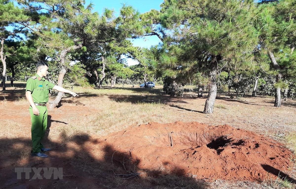 Những cây thông bị trộm để lại các hố đất mới và cũ trong rừng thông huyện Đắk Đoa, tỉnh Gia Lai. (Ảnh: Hồng Điệp/TTXVN )