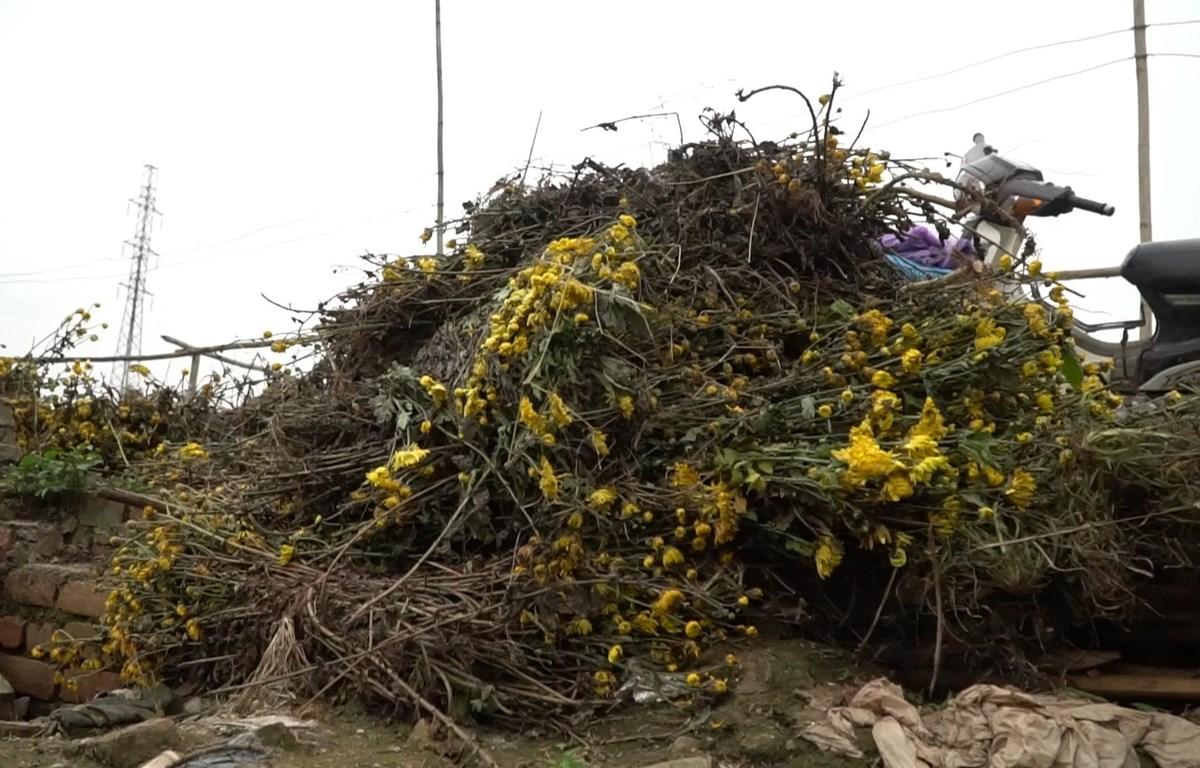 Nhiều loại hoa không bán được bị vứt lại thành từng bó lớn ở ven đường tại làng hoa Tây Tựu. (Ảnh: Lâm Phan)
