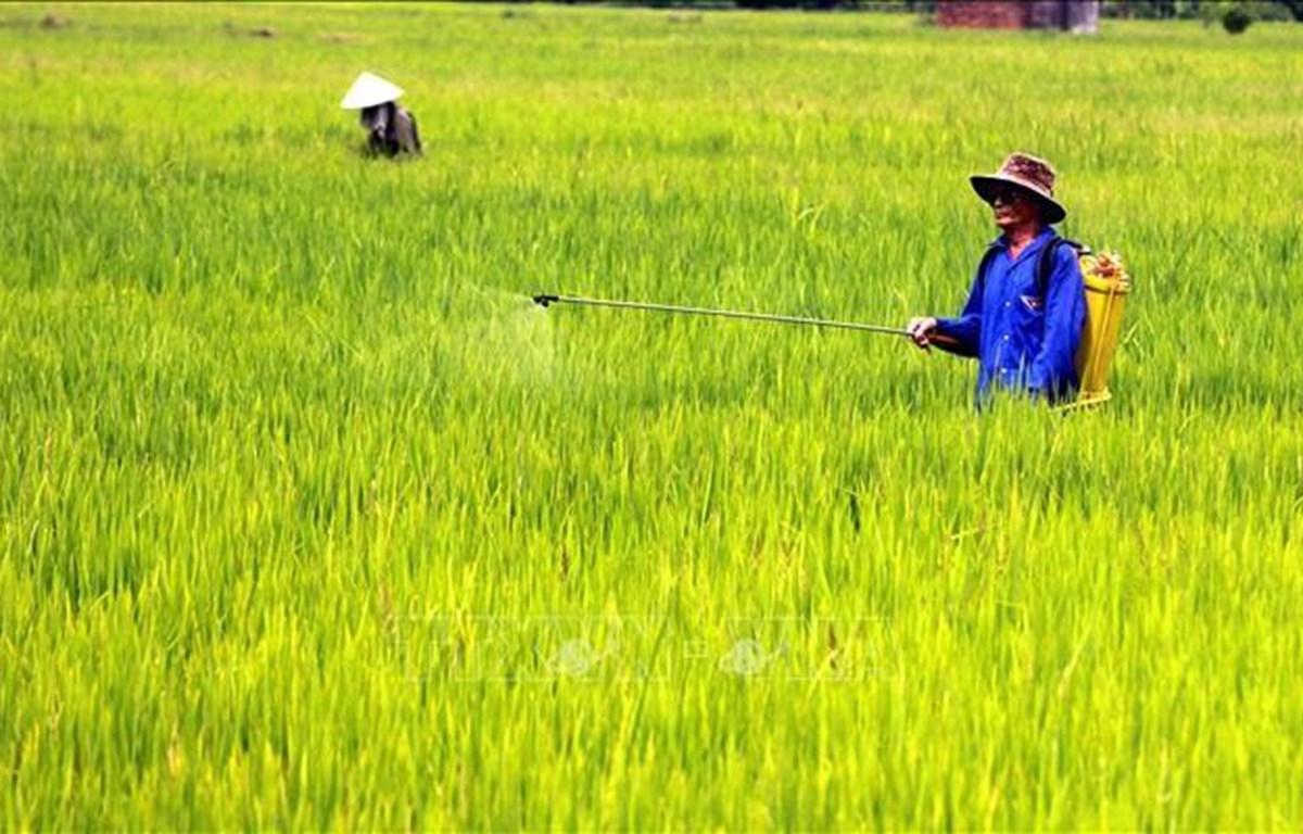 Nông dân phun thuốc trừ sâu (Ảnh:Pv/Vietnam+)