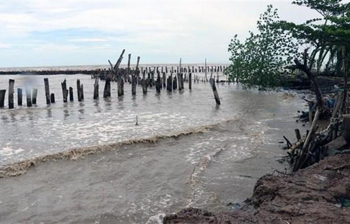 Nước biển dâng gây xói lở và ngập mặn tại Đồng bằng sông Cửu Long. (Ảnh: Lê Huy Hải/TTXVN)
