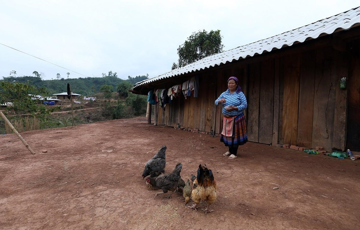 Nhiều hộ gia đình thoát nghèo nhờ các chương trình xóa đói giảm nghèo. (Ảnh: Phan Tuấn Anh/TTXVN)