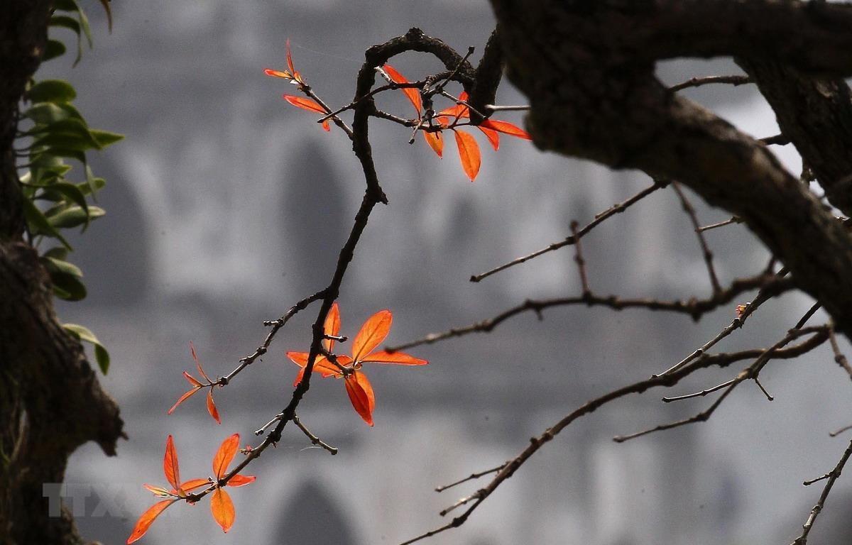 (Ảnh minh họa: Lâm Khánh/TTXVN)