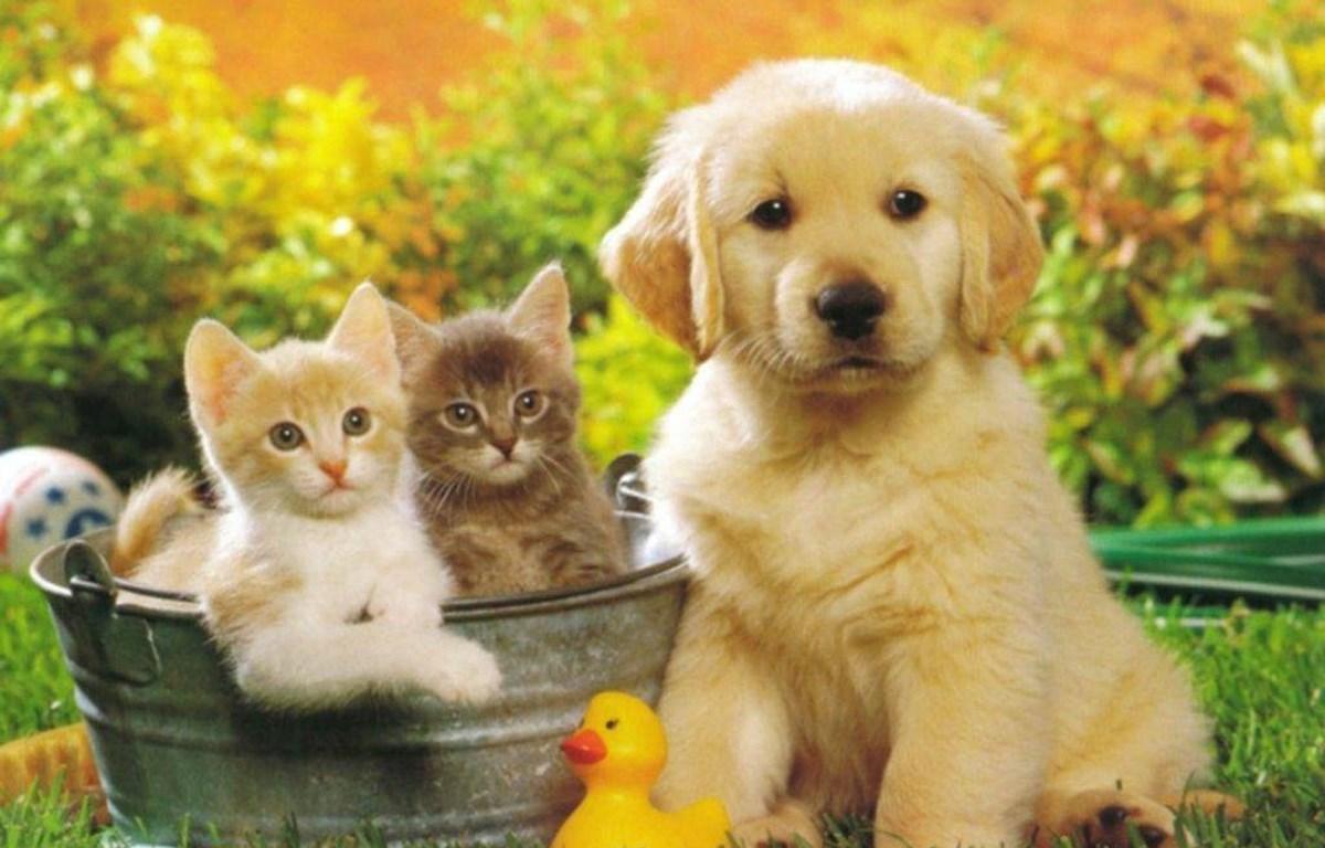 Nuôi thú cưng có thể có những lợi ích không ngờ về sức khỏe. (Nguồn: Insurance Creadit)
