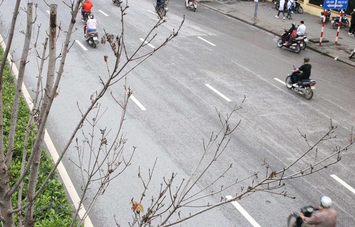 Hàng cây phong lá đỏ trên tuyến đường Trần Duy Hưng-Nguyễn Chí Thanh khẳng khiu, héo khô, không có lá. (Ảnh: Hùng Nguyễn/Vietnam+)