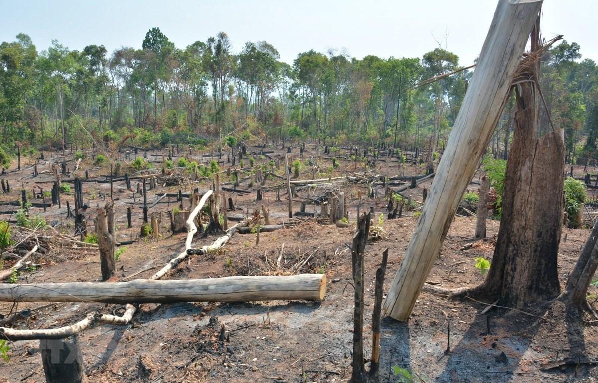 Khu vực rừng bị lấn chiếm. (Ảnh: Hồng Điệp/TTXVN)