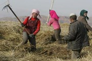 Tỷ lệ người nghèo ở khu vực nông thôn tại Mỹ Latinh tiếp tục tăng