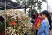 Chợ hoa Mê Linh nhộn nhịp những ngày cuối năm Kỷ Hợi