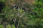 """[Photo] Kon Tum: Phát hiện """"kho tàng"""" đa dạng sinh học ở Kon Plông"""