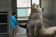Ngỡ ngàng trước kích thước khổng lồ của các loài động vật