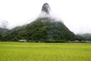 [Photo] Quyến rũ mùa vàng trên cánh đồng Mường Khương ở Lào Cai