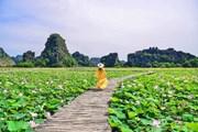[Photo] Khám phá đầm sen được mệnh danh đẹp nhất Việt Nam