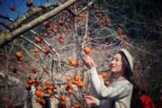 [Photo] Rực rỡ sắc màu cao nguyên Mộc Châu những ngày đầu Xuân