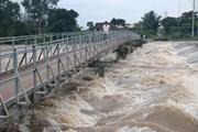Cảnh báo nguy cơ ngập lụt vùng trũng tại Đồng bằng sông Cửu Long