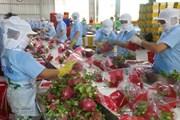 Kim ngạch xuất khẩu rau quả có thể đạt 3,8 tỷ USD trong năm nay