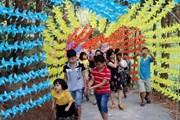[Photo] Hấp dẫn khu du lịch sinh thái đồi thông ở Lai Châu