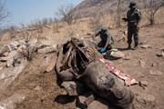 [Mega Story] Tiếng kêu cứu thảm thiết của các loài động vật hoang dã