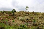 Khởi tố vụ án 2 doanh nghiệp phá rừng trong dự án được giao