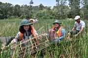 Đắm mình vào thiên nhiên ở Ramsar Tràm Chim mùa nước nổi