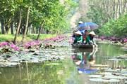 Suối Ấu Vĩnh An - điểm đến hấp dẫn du khách trong mùa Thu
