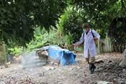 Phú Yên hết cúm gia cầm H5N6, hoạt động giết mổ trở lại bình thường