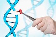 Cấy ghép não, con người biến đổi gene chỉ còn là vấn đề thời gian?