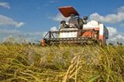 Xuất cấp 300 tấn hạt giống lúa giúp Lào khôi phục sản xuất