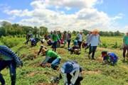 Thái Lan khuyến khích các sáng kiến xanh nhằm giảm khí thải carbon