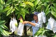 Xoài Việt Nam chính thức được xuất khẩu sang thị trường Hoa Kỳ