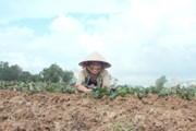 [Photo] Nông dân Quảng Bình tích cực sản xuất nông nghiệp sau bão lũ