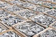 [Photo] Cận cảnh quy trình làm đặc sản cá nục hấp phơi khô ở Quảng Trị