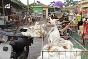 [Photo] Chợ Hà Vĩ đảm bảo nguồn cung gia cầm cho thị trường Hà Nội
