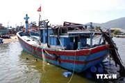 Tàu Trung Quốc uy hiếp, đâm chìm tàu cá Việt Nam là vô nhân đạo