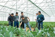 Hơn 800 hộ nông dân tham gia chuỗi sản xuất nông sản sạch cùng VinEco