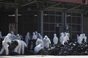 Hong Kong tiêu hủy 4.500 gia cầm do lo ngại virus cúm H7N9