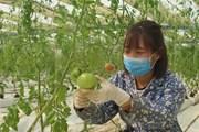 """Vì sao việc sản xuất nông nghiệp sạch vẫn còn """"chậm lớn""""?"""