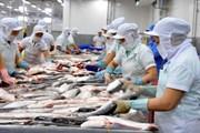 Giá cá tra nguyên liệu tăng mạnh nhờ nhu cầu chế biến xuất khẩu