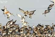 Hàn Quốc tăng công tác kiểm dịch virus cúm gia cầm vào mùa chim di cư