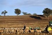 Australia báo động nguy cơ khủng hoảng nguồn nước do hạn hán