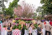 Lâm Đồng: Trồng 125 cây hoa anh đào Nhật Bản tại Đà Lạt