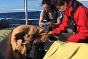 Malta tiếp nhận 11 người di cư sau nhiều ngày lênh đênh trên biển