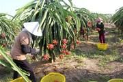Việt Nam-New Zealand hợp tác chia sẻ thông tin chuẩn bị cho CPTPP