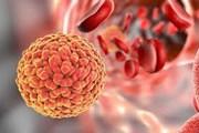 [Video] Vắcxin chống sốt vàng có tác dụng với virus Zika