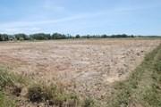 """[Photo] Quảng Trị hạn hán kéo dài khiến đồng khô, lúa """"khát"""""""