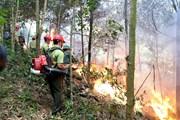 [Photo] Diễn tập chữa cháy rừng cấp quốc gia năm 2019