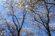 [Photo] Nga: Du khách đổ về miền Nam ngắm hoa dù bị hạn chế vì dịch