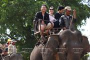 Thưởng thức thú cưỡi voi khám phá hồ Lắk hoang sơ giữa Tây Nguyên