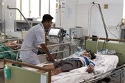 Năm người nhập viện trong tình trạng nguy kịch do ngộ độc ăn cá nóc