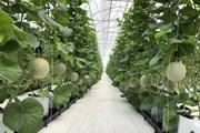 Phát triển nông nghiệp thông minh: Thời nhà nông đầu tư công nghệ cao