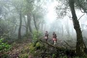 Chiêm ngưỡng vẻ đẹp hùng vĩ của rừng Tả Liên Sơn ở Lai Châu
